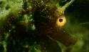 RETOUR EN IMAGE : PALMARES ET GALA ONLINE - Trophée macro et rencontre vidéo de l'étang de Thau