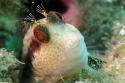 Week-end Bio Méditerranée à Banyuls