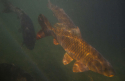 Plongée eau douce au lac du Salagou