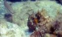 Randonnée subaquatique: Sortie familiale