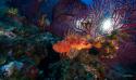 Formation plongeur Biologie niveau 2 PB2
