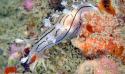 Devenez plongeur naturaliste