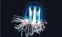 Stage : Plancton et laboratoire