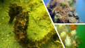 CONFERENCE : La Lagune de Thau